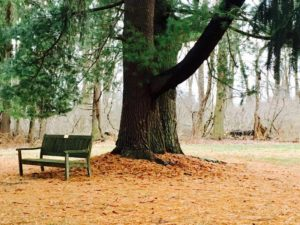 Bench by tree in woods.