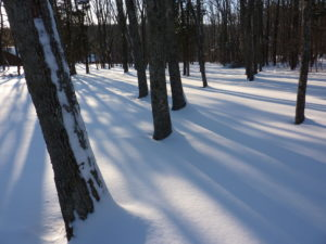 'How the Light Gets In':  Invoking Winter's Beauty for Wholeness and Healing, A Courage & Renewal® Retreat @ Cranaleith Spiritual Center